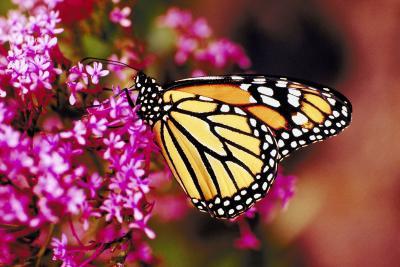 Shade Tolerant Perennials That Attract Birds Amp Butterflies