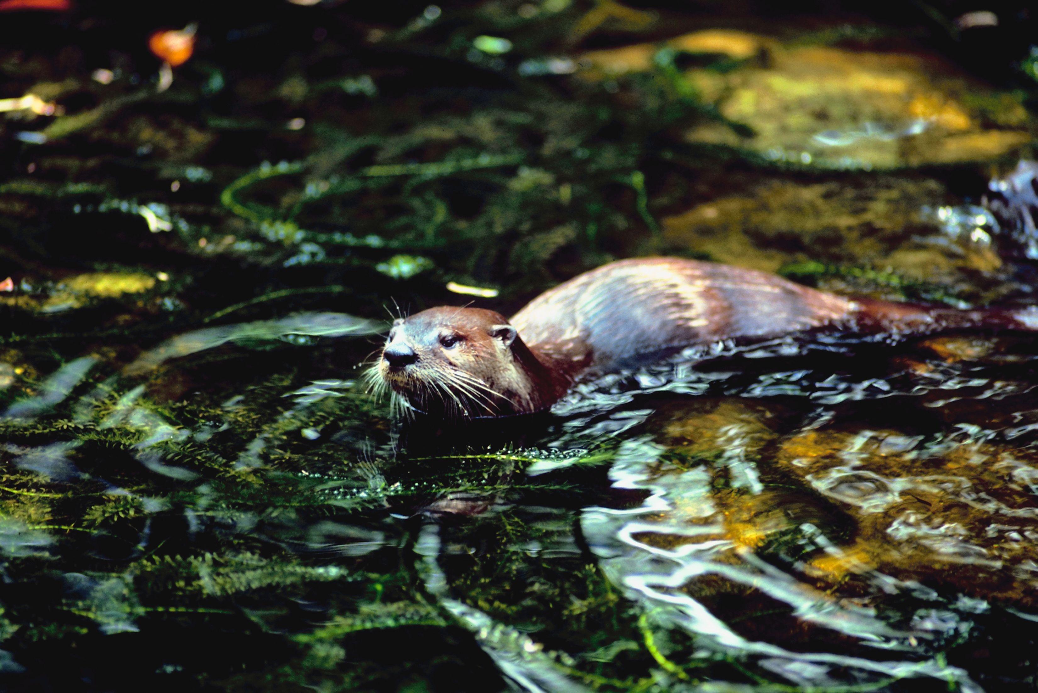 Animales que viven en agua dulce  eHow en Espaol