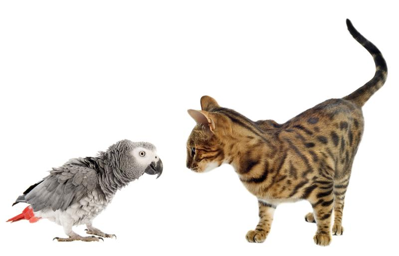 What Animals Get Along With Parrots Pets