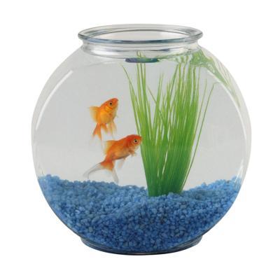 The ph level for goldfish animals for Bocal aquarium original