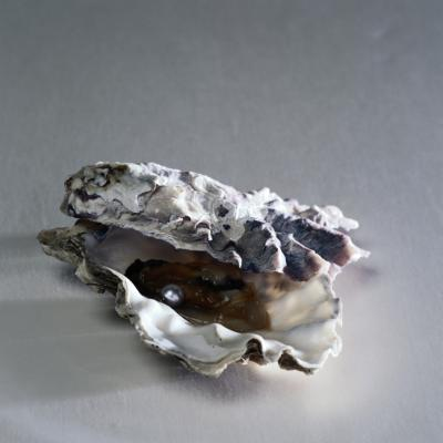 How To Use Oyster Shells In The Garden For Moles Home