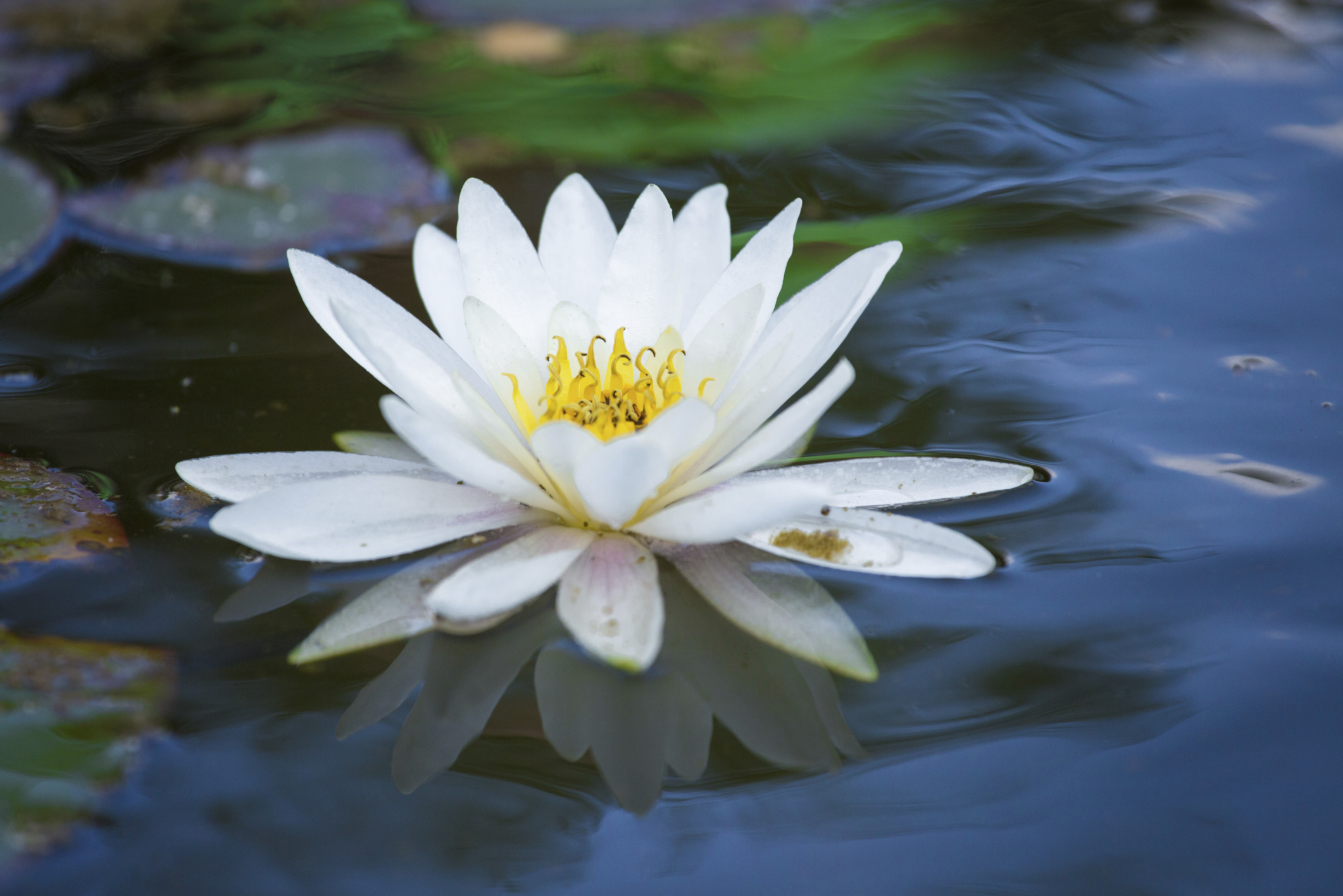 Allergies related to the scent of lily flowers healthy living izmirmasajfo Gallery