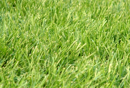 How to Transplant St  Augustine Grass | Garden Guides