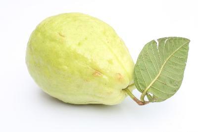 a guava levelek fogynak
