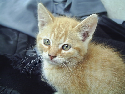 About Deworming Medicine for Kittens - Pets
