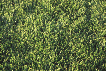 The Best Fertilizers for Floratam St  Augustine Grass   Garden Guides