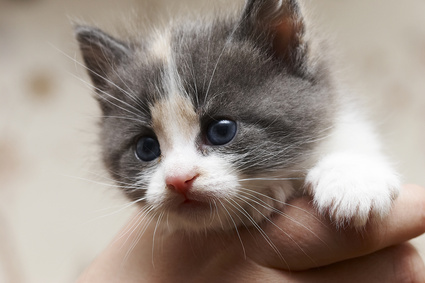 What Does A Five Week Old Kitten Need Pets