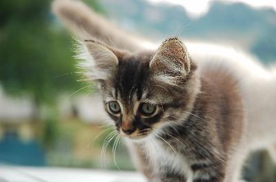 Cat Spraying After Neuter
