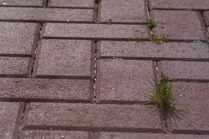 How to Kill Weeds Between Pavers