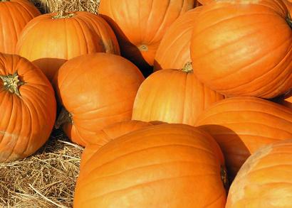 Fall Festival Theme Ideas For Churches