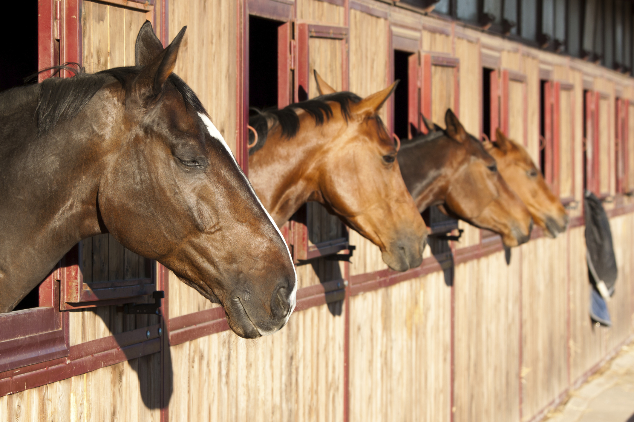 How to Open a Horse Boarding Stable | Bizfluent