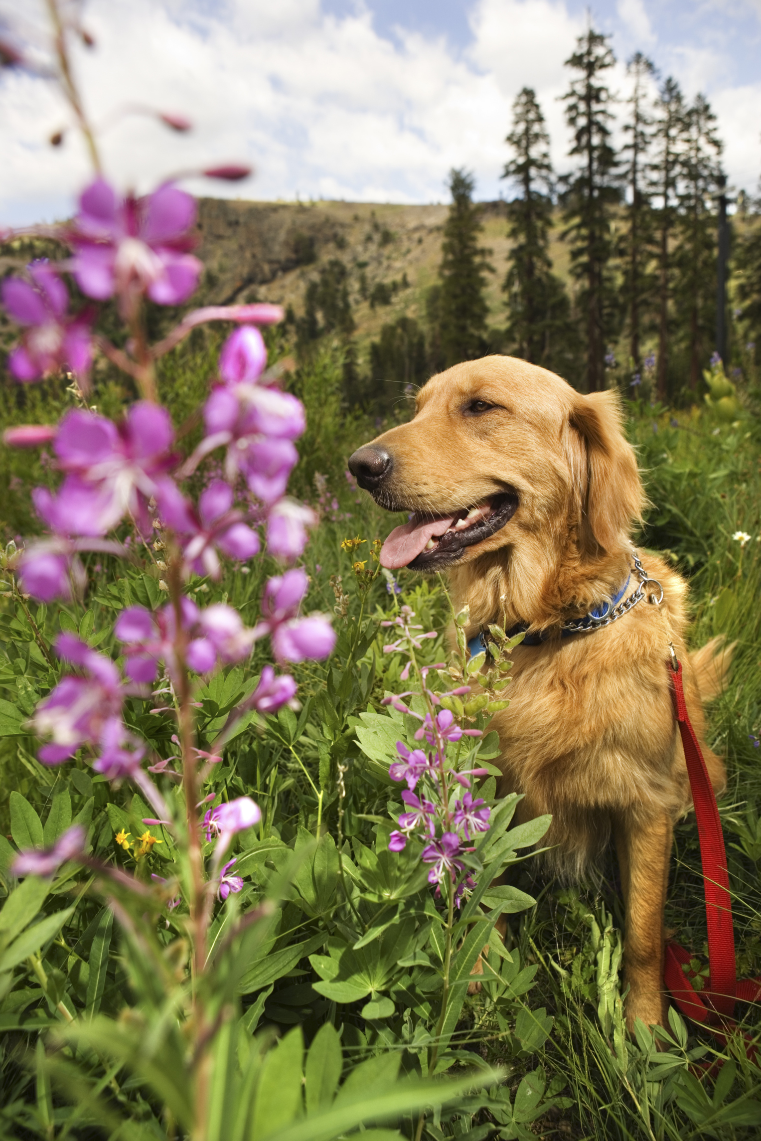 Natural Remedies to Stop Dogs From Scratching Skin | Animals - mom.com