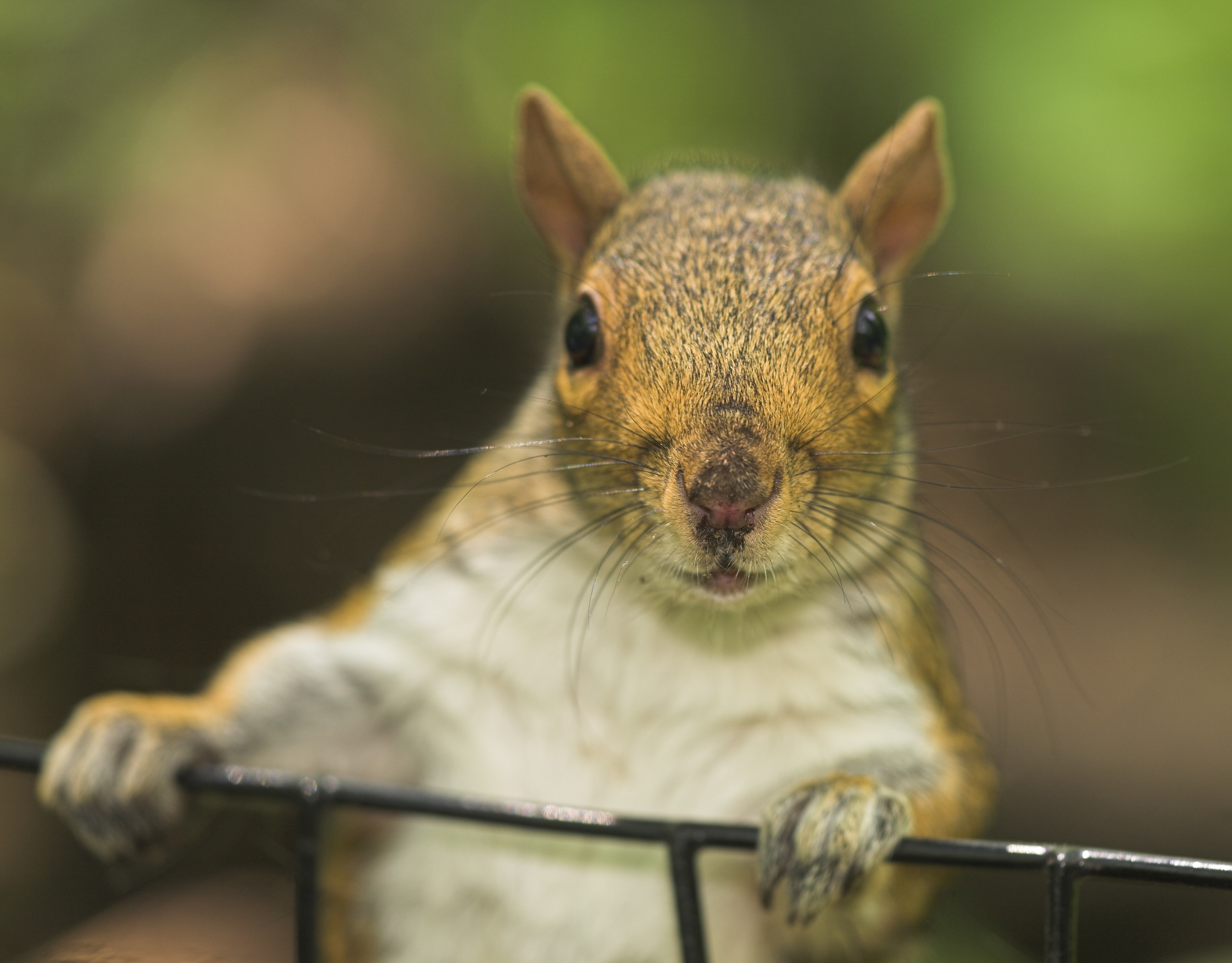 How To Keep Squirrels From Eating Hostas Home Guides Sf Gate