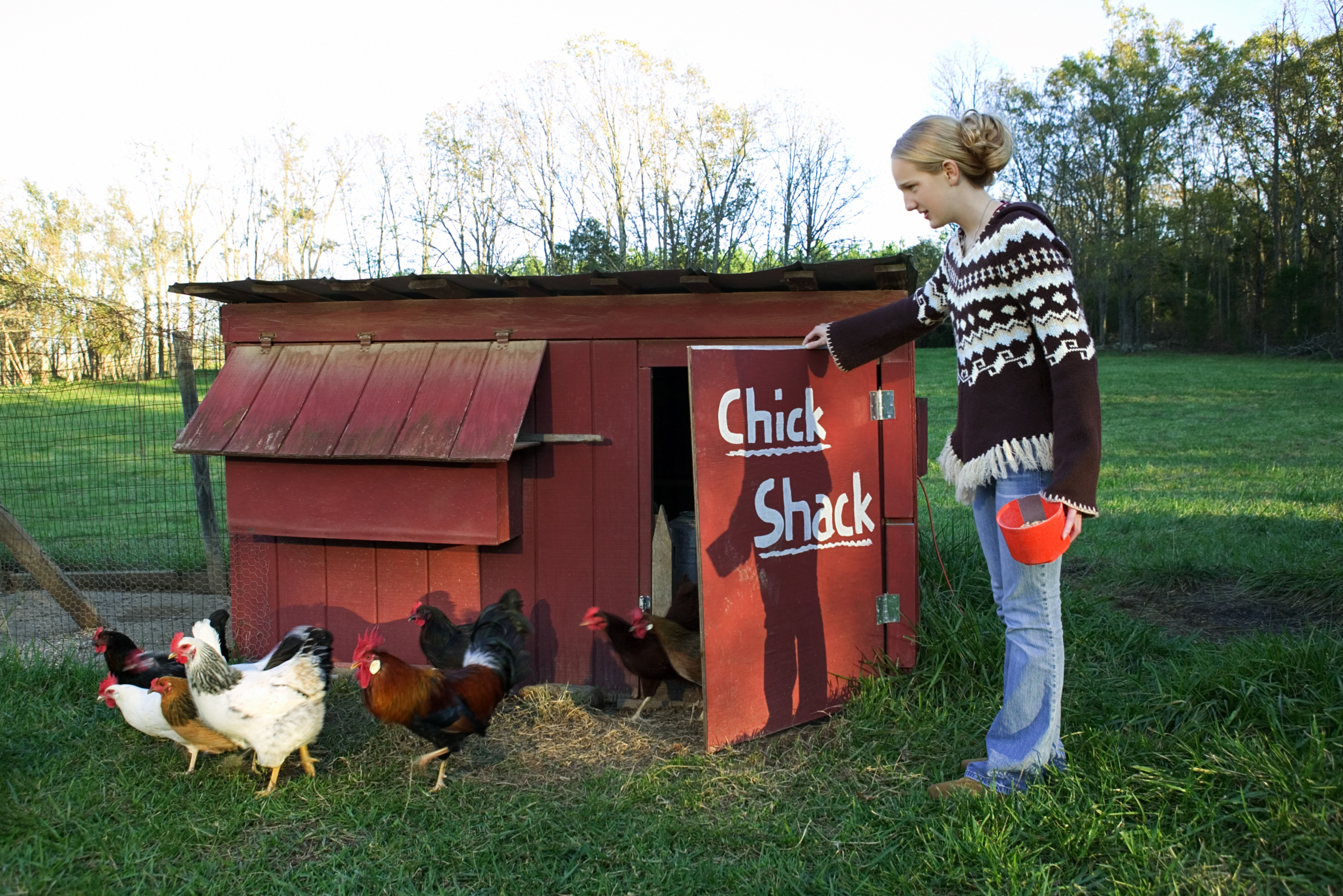 How to Cover Up a Chicken Coop Smell | Home Guides | SF Gate