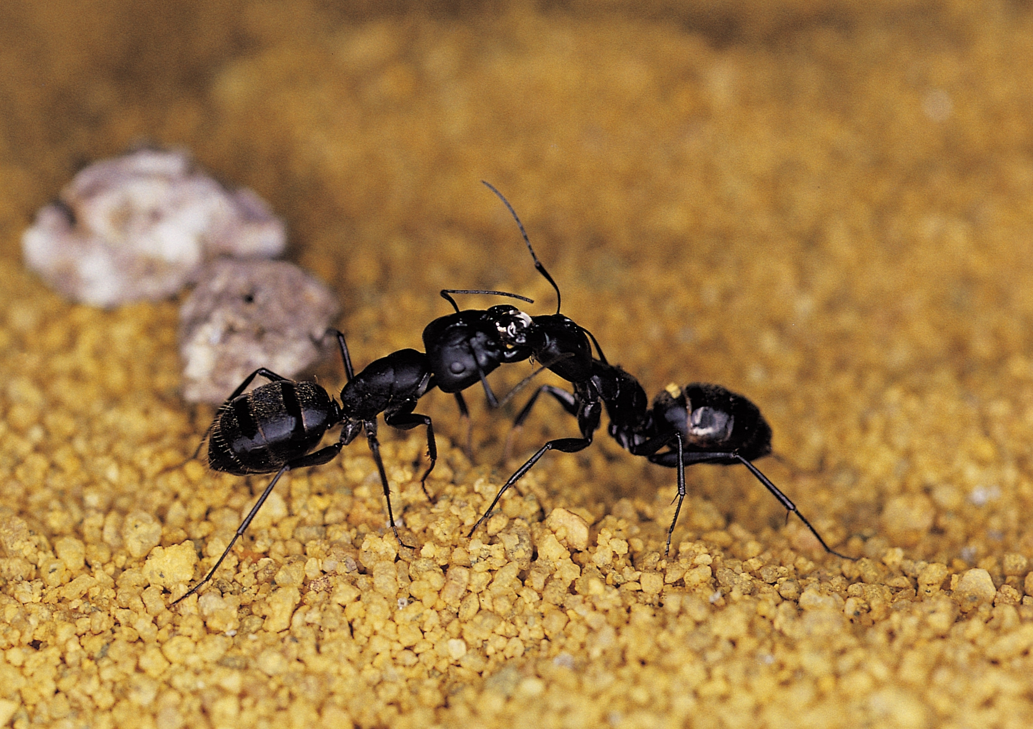 How To Get Rid Of Flying Ants Outside Animals Mom Com