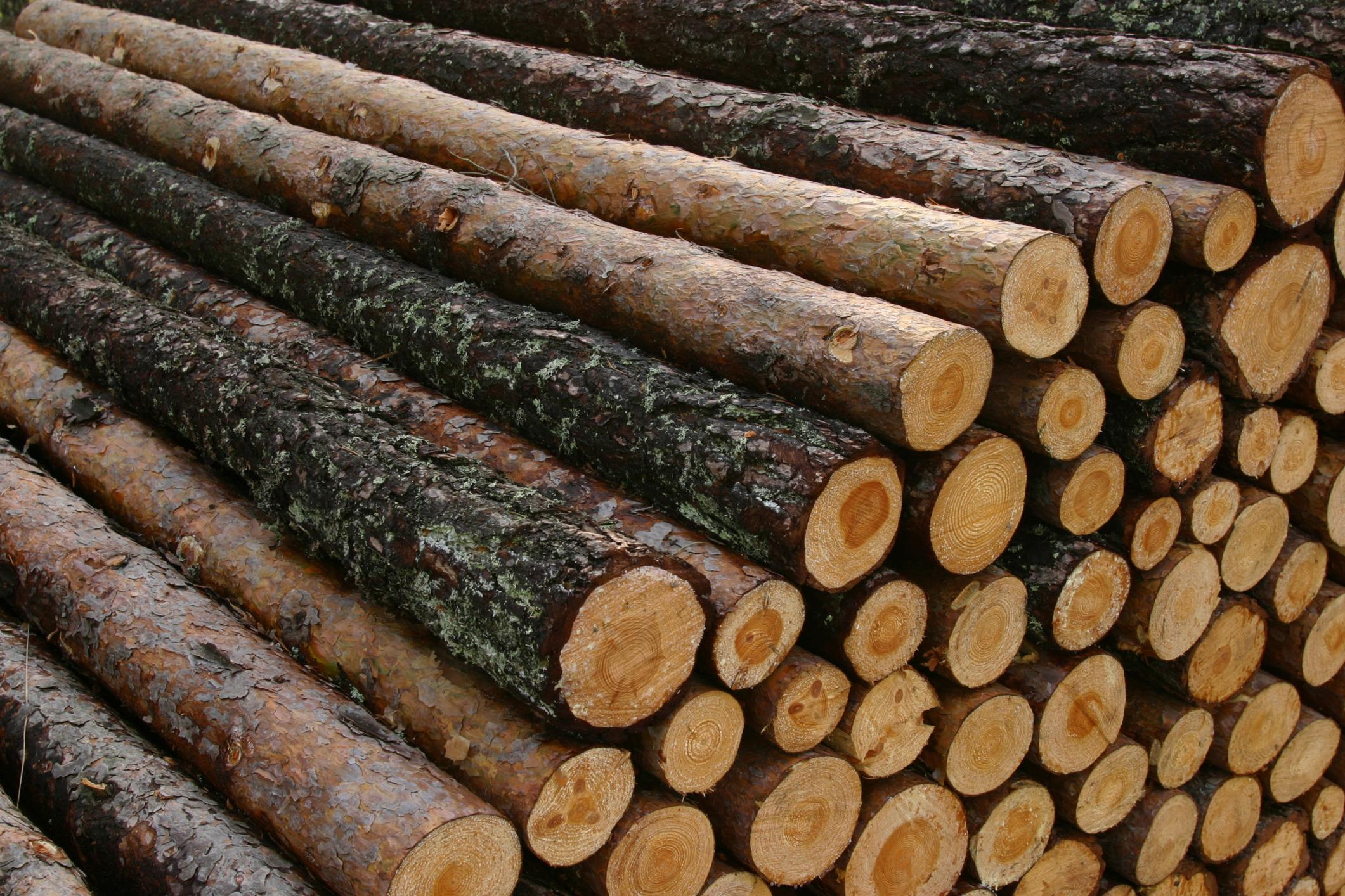 Salary of a Tree Cutter | Chron com