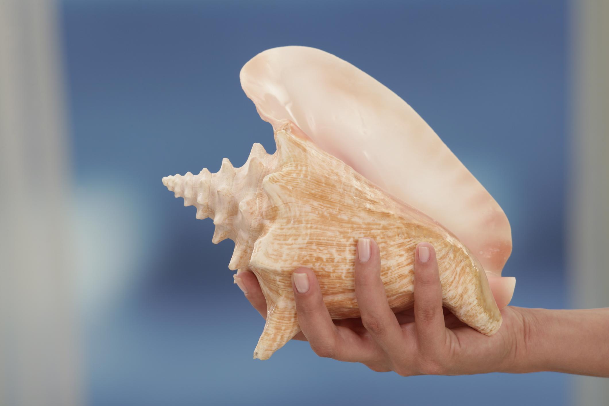 Como remover uma lesma do mar de sua concha