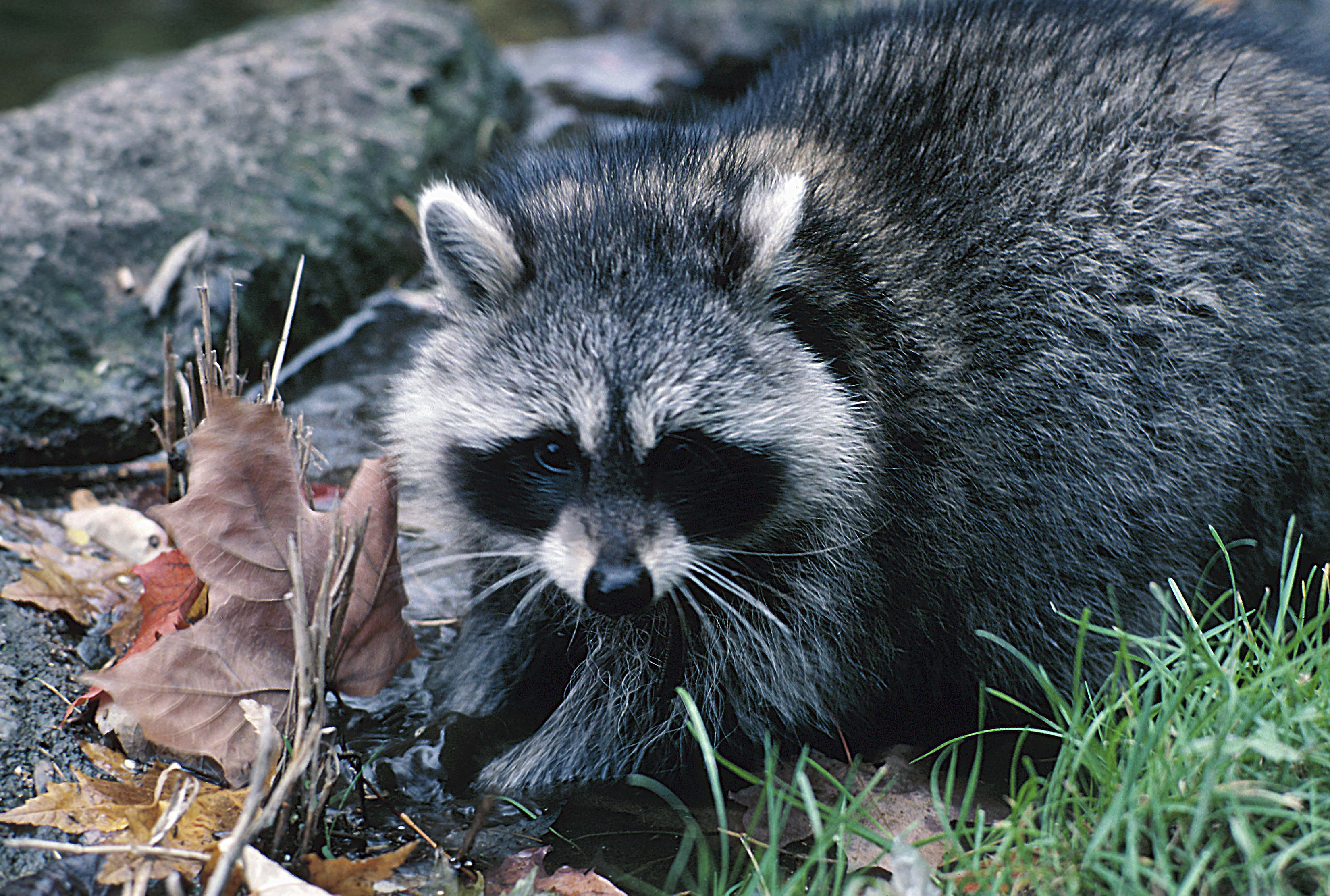 What Can I Do to Chase Away Pests Under My Mobile Home