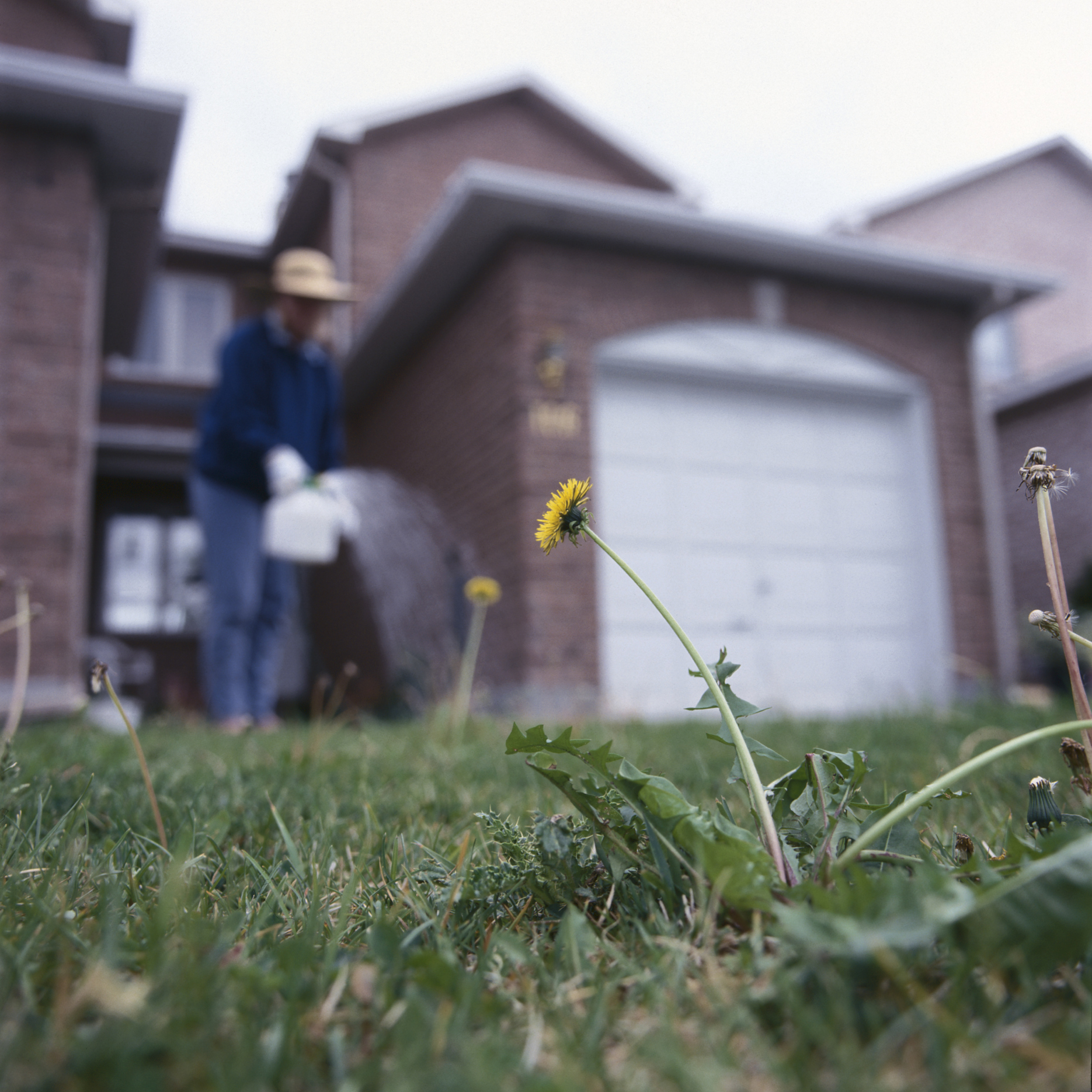 How Long Does It Take for Salt to Kill a Weed? | Home Guides