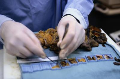 How Much Do Forensic Science Pathologists Make Work Chron Com
