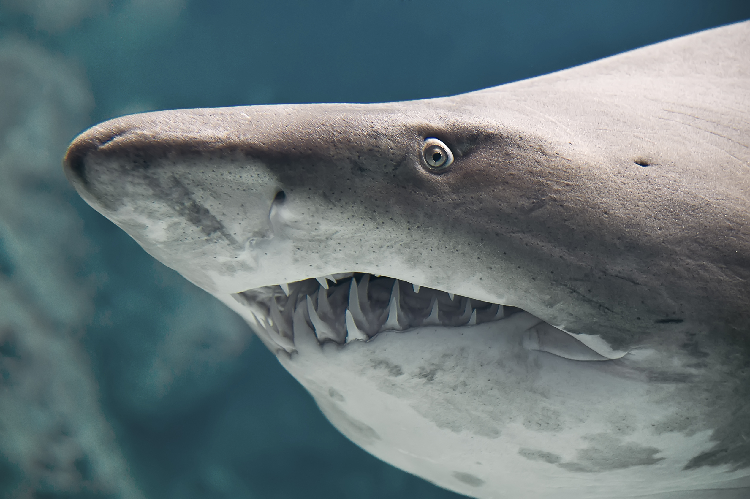 What Kinds of Sharks Are in Myrtle Beach, South Carolina?