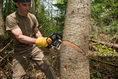 b96dbfdf65f3 Salary of a Lumberjack. by Gregory Hamel. Lumberjacks often use chainsaws  to fell trees.