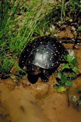 Supplies Needed For A Turtle Habitat Animals Mom Com