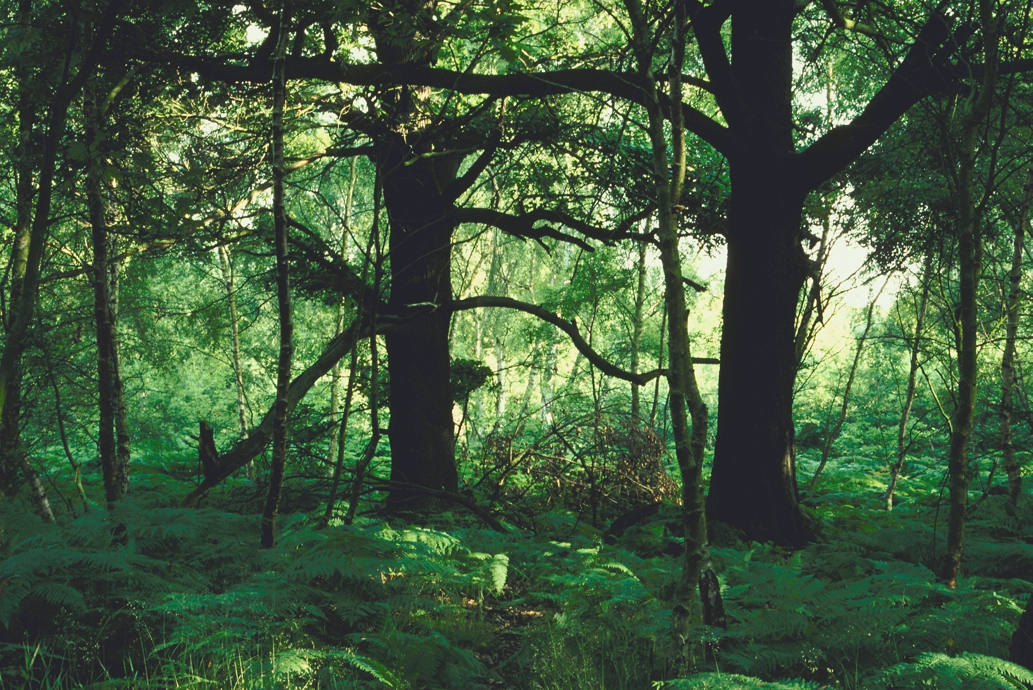 uses of forest in human life