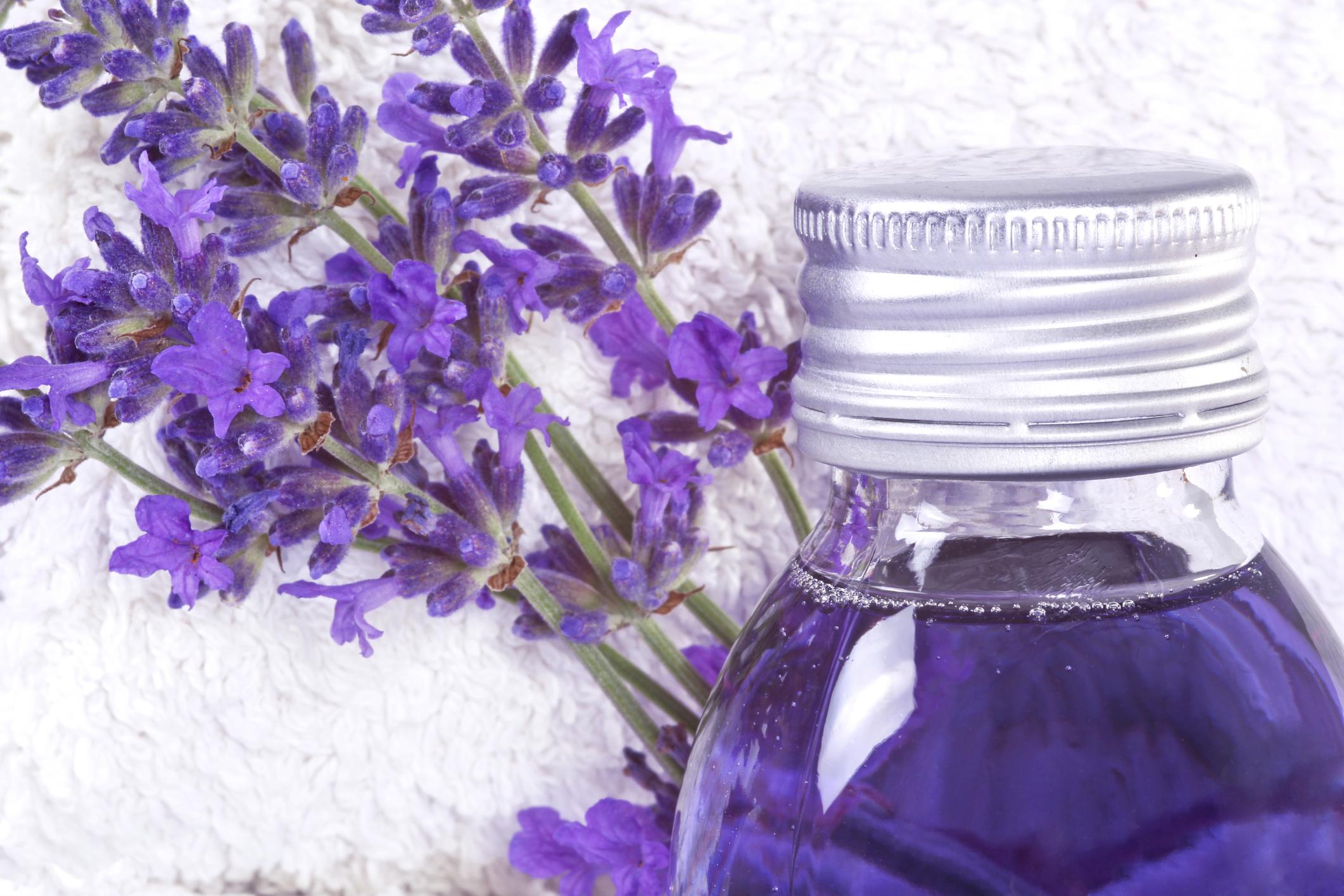 Lavender Oil As A Bug Repellent Leaftv