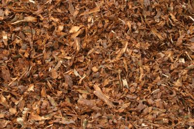 How To Mulch With Cedar Shavings Home Guides Sf Gate