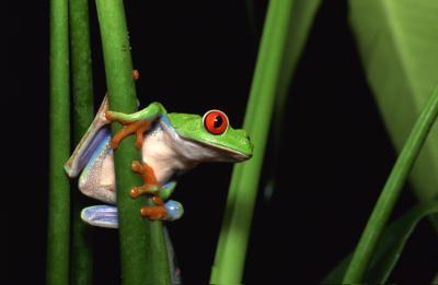 Frog sex mom boy