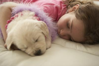 The Average Sleep for Dogs - Pets