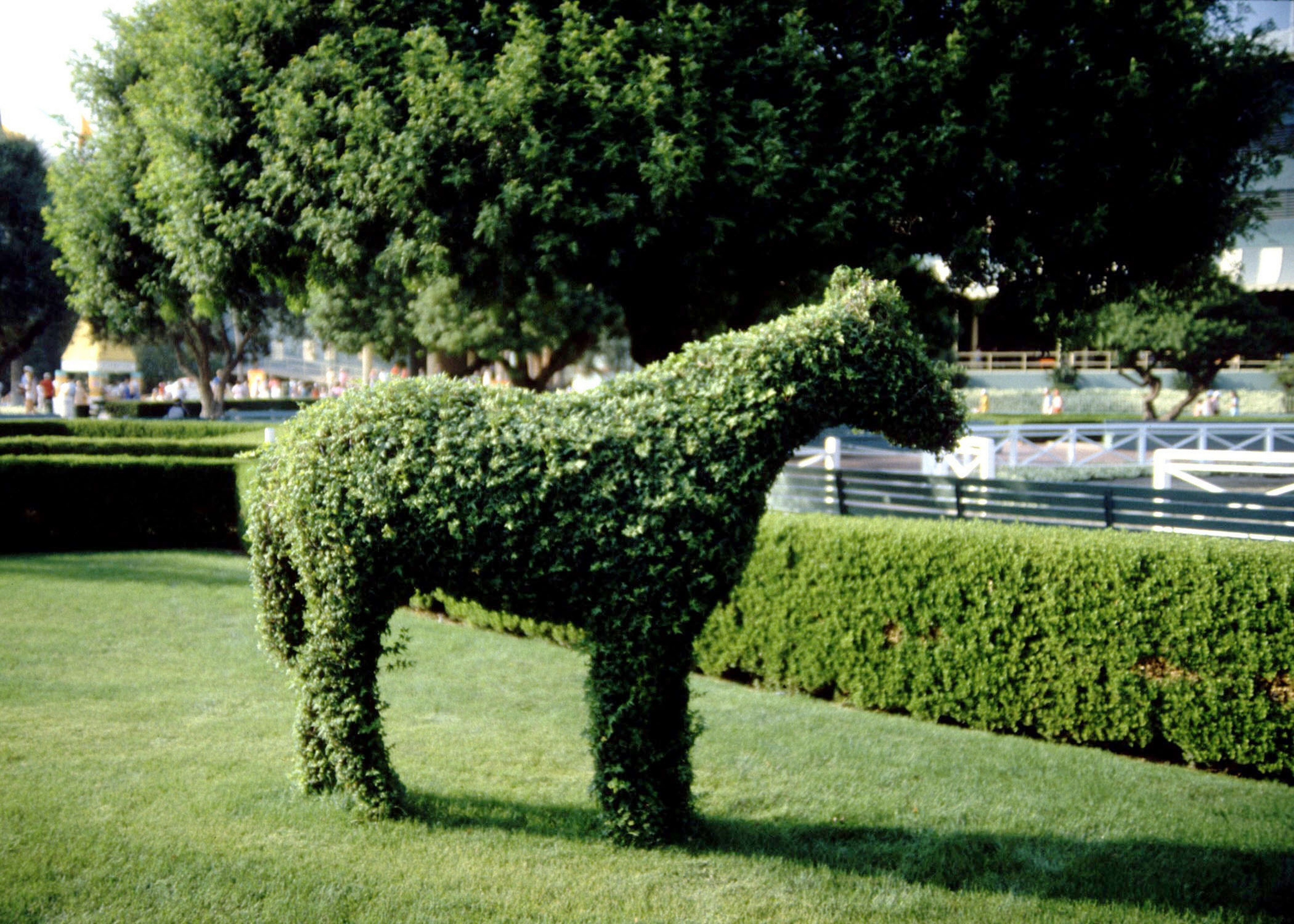 Can Boxwood Grow in the Shade? | Home Guides | SF Gate on
