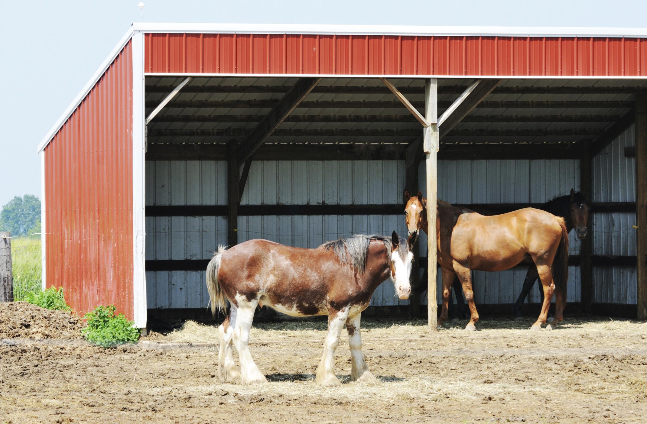 How To Build A Horse Shelter Animals Mom Com