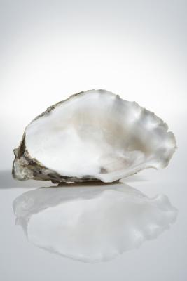 Image result for image of an empty oyster shell