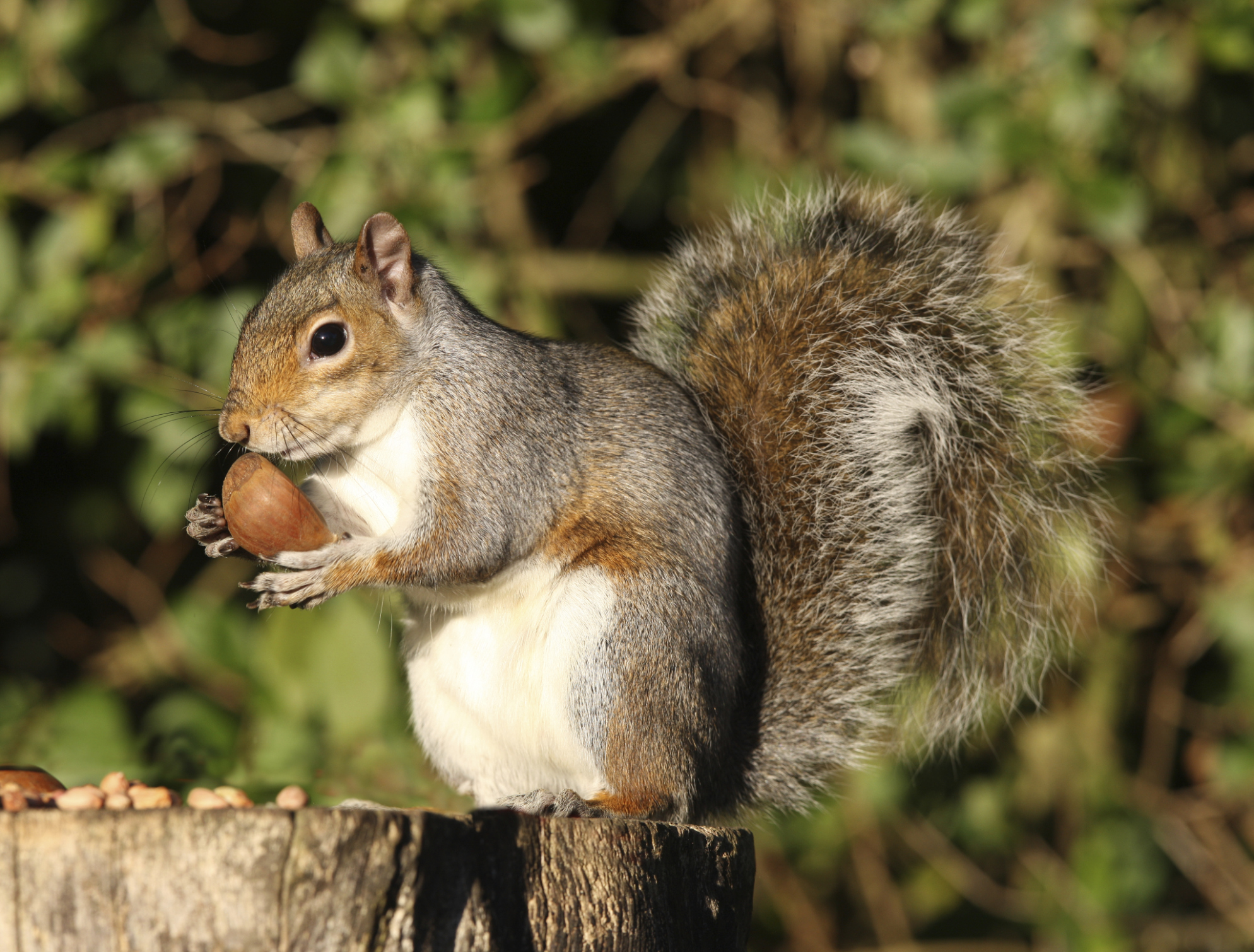 How To Tell The Age Of A Baby Squirrel Using Pictures Animals Mom Com