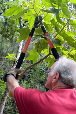 The Best Ways To Prune A Mountain Laurel Home Guides Sf Gate