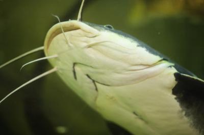 How To Fix Fish Tank Pump Noise Animals Mom Com