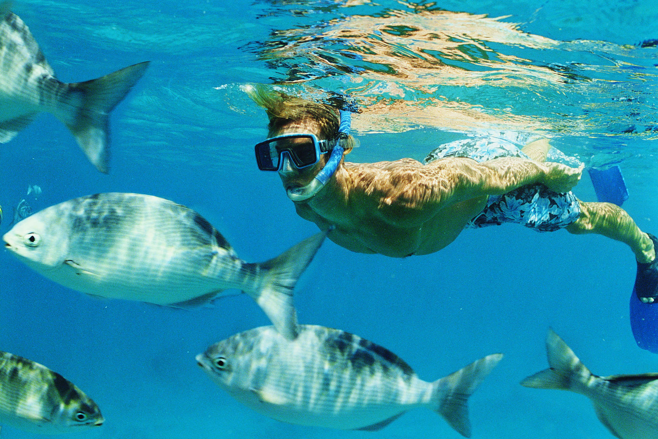 Snorkeling at the Destin Jetties in Florida | USA Today