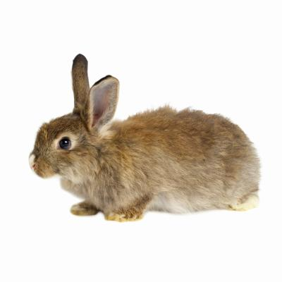 Things You Need For A Dwarf Bunny Animals Mom Com