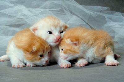 Should the Father Cat Be Kept Away From Newborn Kittens? - Pets