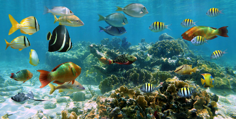 Five Basic Characteristics of Fish