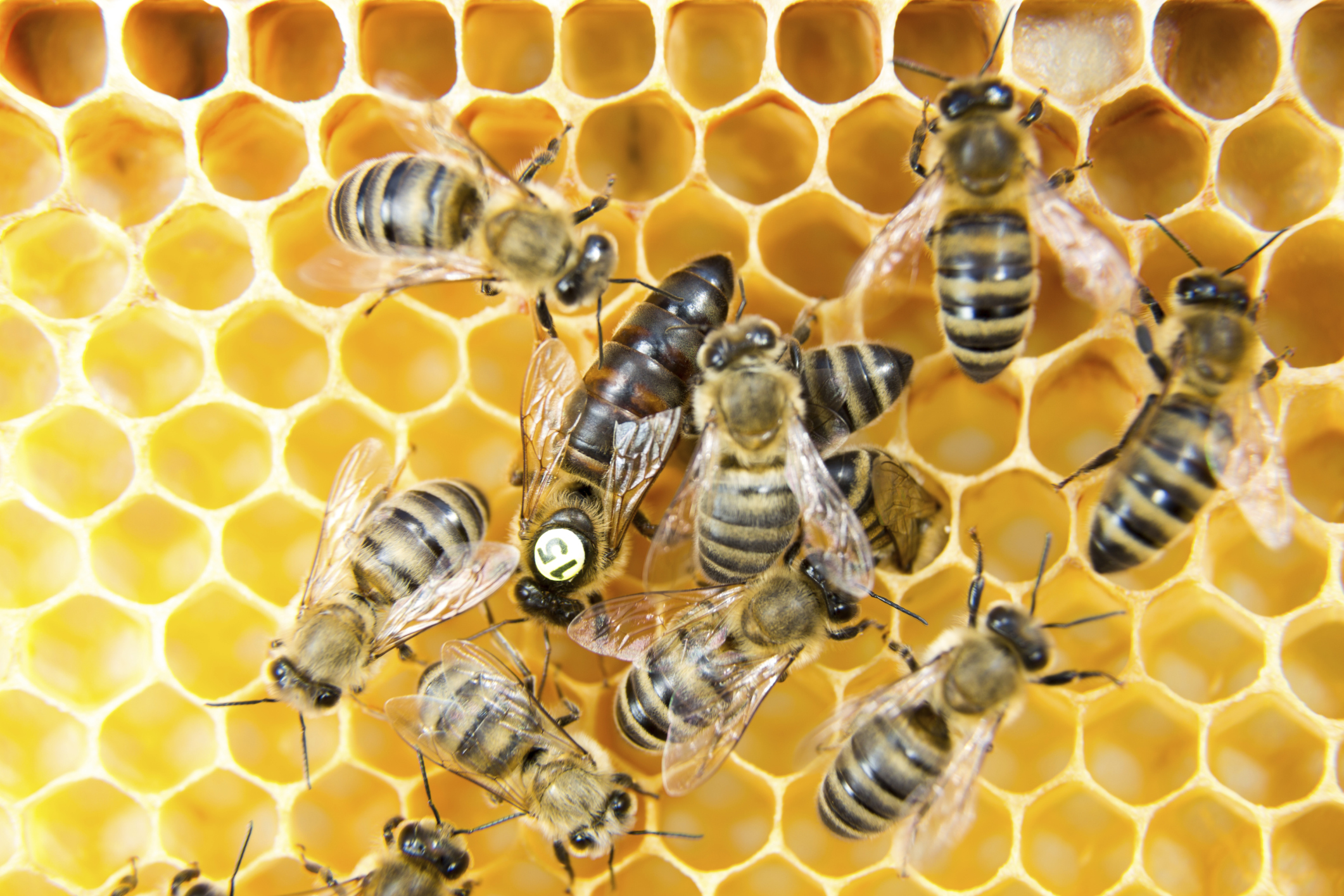 How Does A Bee Become A Queen Bee