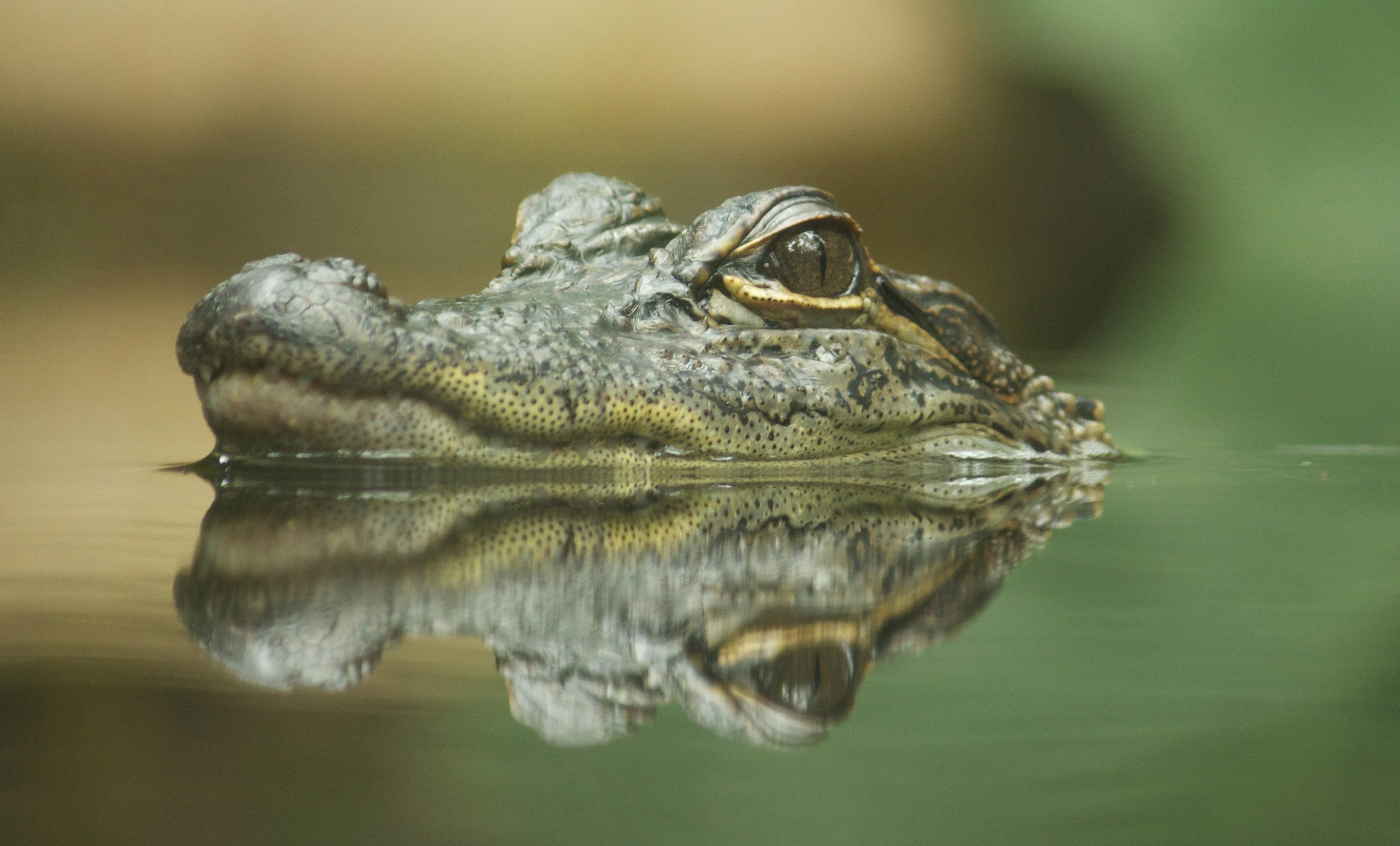 Body Parts of a Crocodile | Sciencing