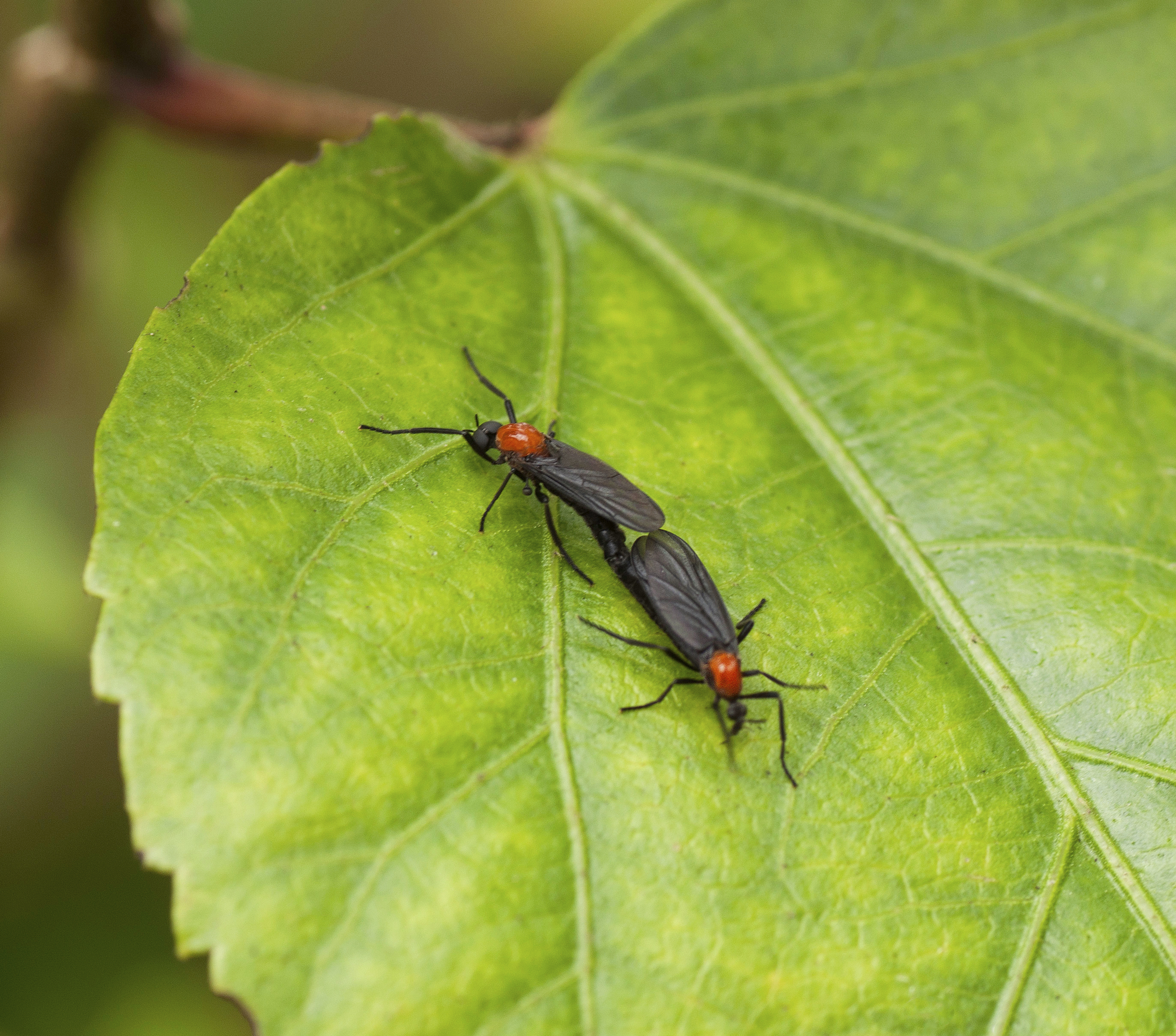 What Repels Lovebugs and Flying Insects? | Home Guides | SF Gate