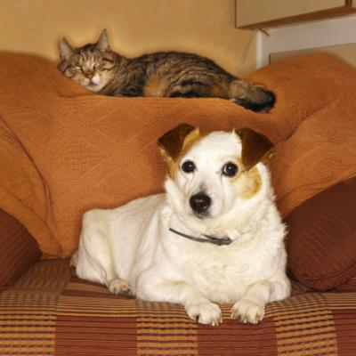 How Long Have Dogs & Cats Been Domesticated? - Pets