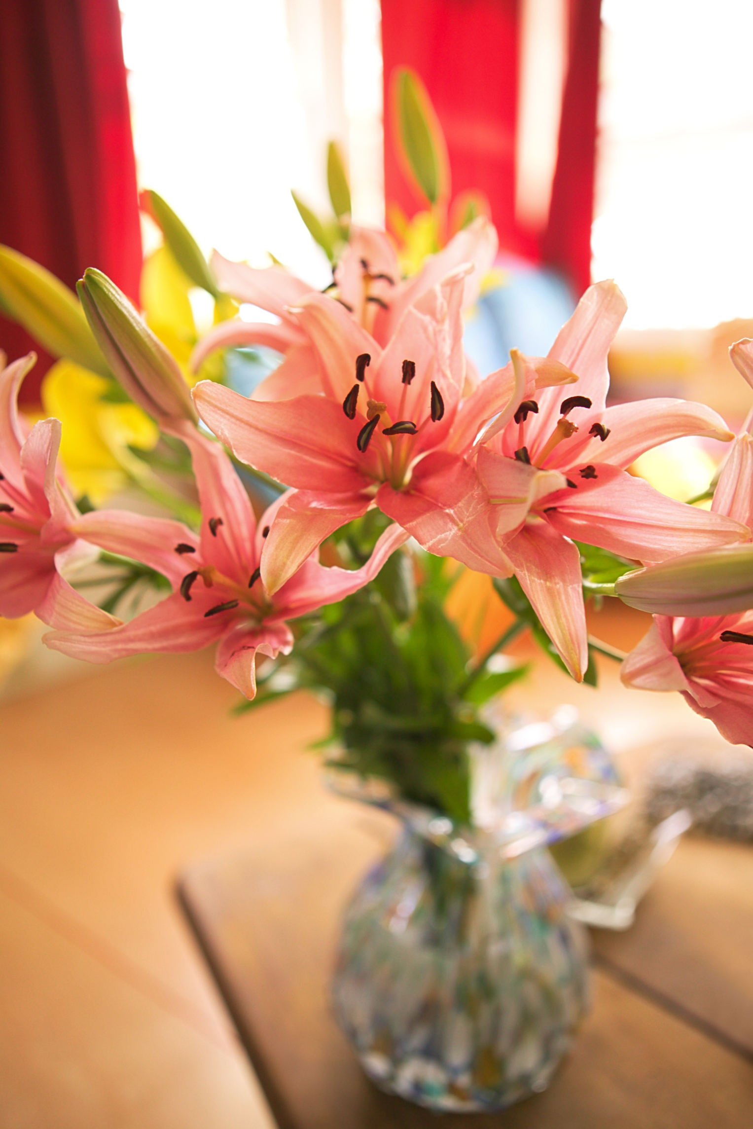 Best ways to care for the asiatic lily home guides sf gate izmirmasajfo