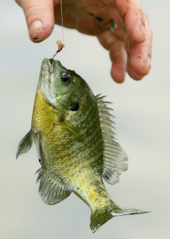 Fishing Watersports Savannah Ga Savannah Com