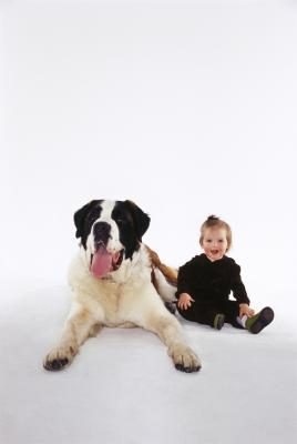 How Early Can A Saint Bernard Puppy Be Adopted Out Pets