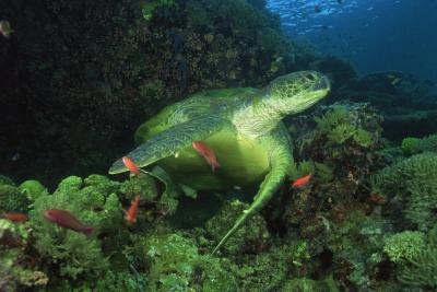 reptiles of the arabian peninsula  animals  mom